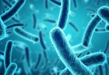 Shionogi and Hsiri to develop mycobacterial disease therapies