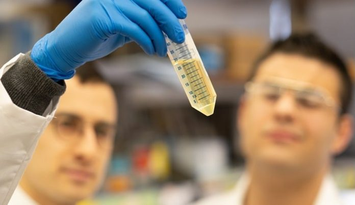Feinstein Institutes to Collect COVID-19 Patient Plasma, Research Antibodies Therapy