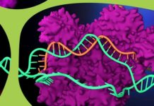 Merck Licenses CRISPR Genome-Editing Technology to PanCELLa and Takara Bio USA