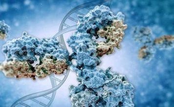 Anti-IL-18 Antibody