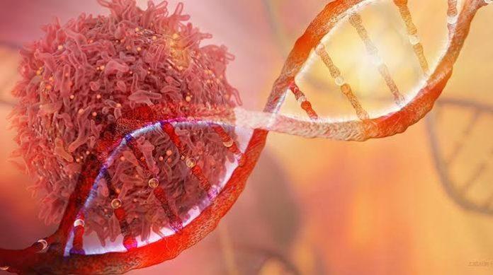 Medigene, IRICoR and Universite de Montreal sign collaboration and exclusive licensing option on novel cancer antigens